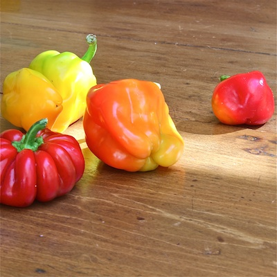 Late Season Sweet Peppers: The Wimpy Vegetarian
