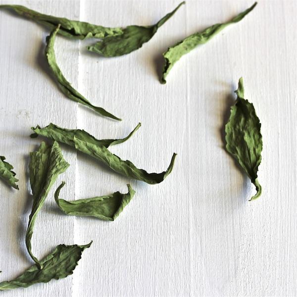 how to grow stevia, making stevia