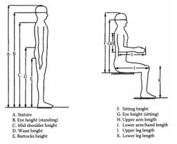 Anthropometric Diagram