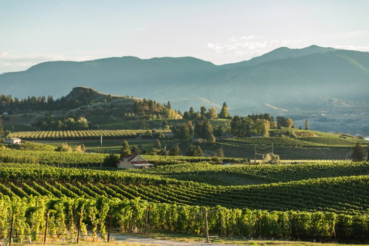 The Okanagan Valley is one of the most beautiful wine regions in the world (and that is saying a lot given the beauty that often comes with wine country)