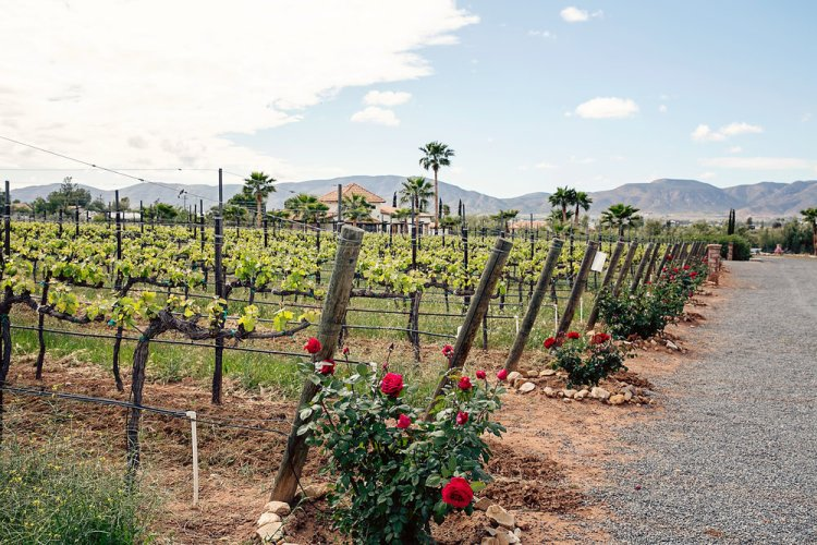 Lechuza Vineyard on the Valle de Guadalupe Wine Route