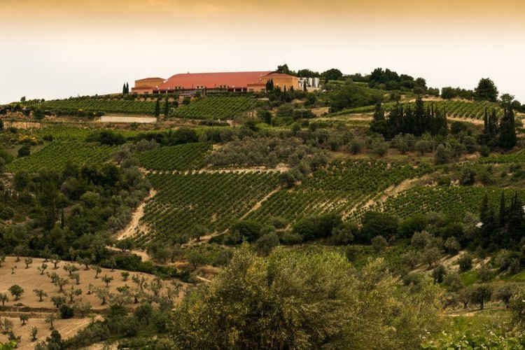The Seméli Winery in Nemea produces Nemea PDO Agiorgitiko and also an impressive array of other wines