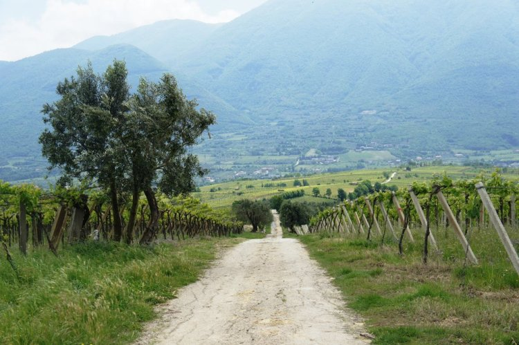 Welcome to the wine roads of Sannio - a rustic landscape of vineyards and mountains.