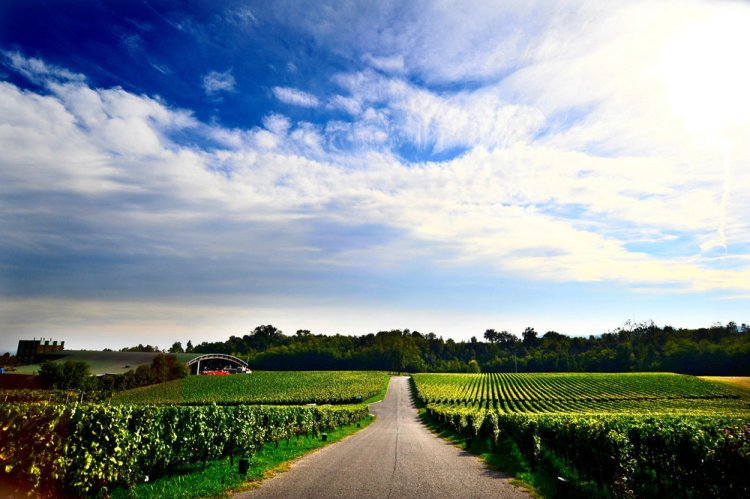 Ca' Del Bosco Vineyard in the Franiacorta region of Lombardy