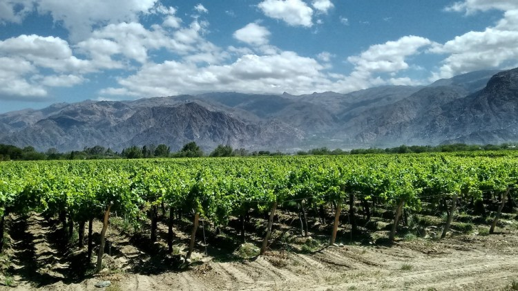 Valle Calchaqui in the Cafayate region of Northern Argentina is the home of Torrontés