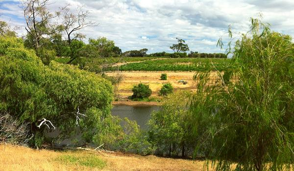 Iron Cloud Winery with the Henty Creek and rolling hills emblematic of Geographe