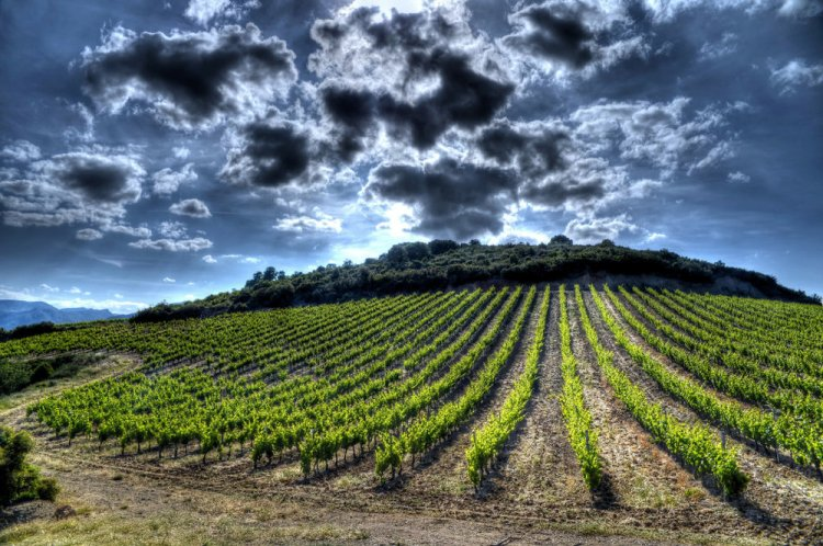 Languedoc has a startling array of great wine roads