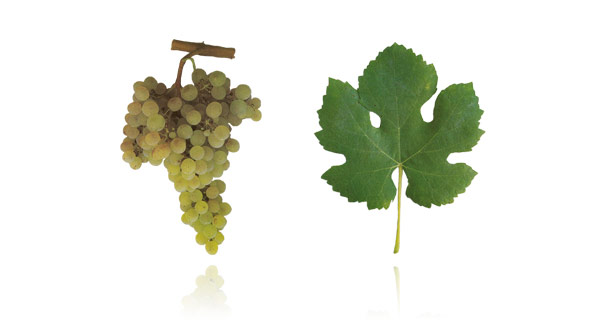 The Arinto grape variety makes a bright, lively, mineral wine - both in still and sparkling form.