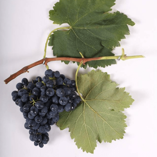 It doesn't get much bolder than the iconic Saperavi grape