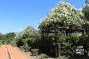 Babylonstoren-flower-gabels