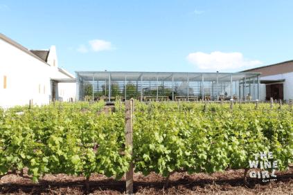 Babylonstoren-wine-tasting-rom