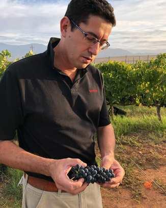 zandvliet winemaker jacques