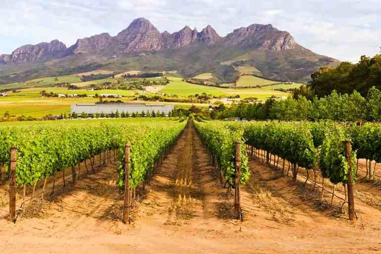 South African Wine Lockdown