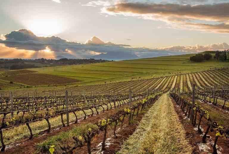 Durbanville Wine Valley Daria views of vineyards