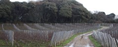 English sparkling wine coming soon(ish) from the Isle of Sark