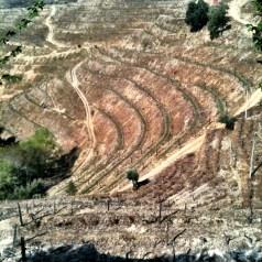 Revitalizing an old family vineyard and 100 year old port, Quinta da Manuela
