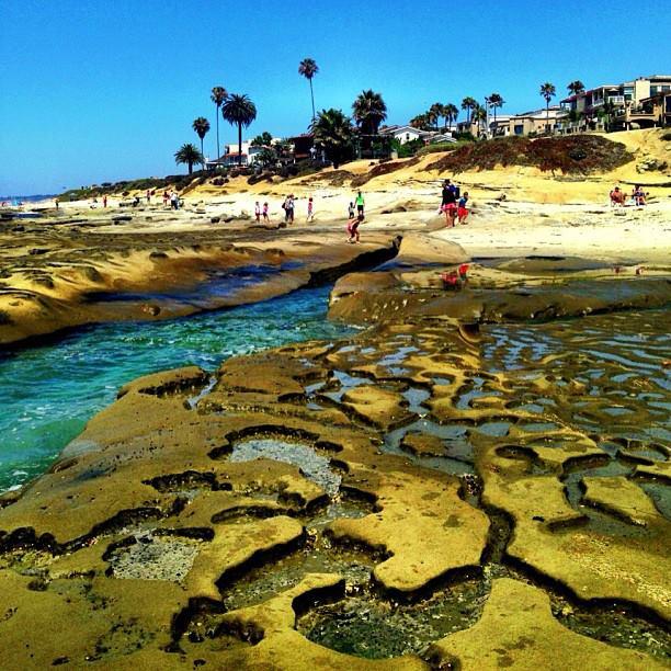 the tide pools at La Jolla
