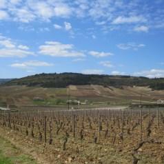 Video – Discover the Origin, Bourgogne