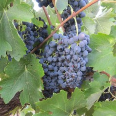 Featured Post – Visiting Australian Vineyards