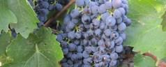 Featured Post – Visiting Australian Vineyards