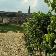 Featured Post – Exploring the World's Greatest Wine Regions