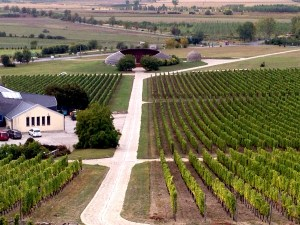 the vineyards and the winery