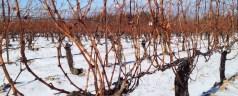 Ice, Ice (Wine) Baby – Niagara's Ice Wine Festival
