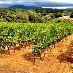 Celebrity Wine Vineyards that You Should Visit