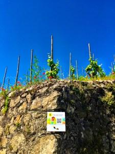 the terroir of Hermitage, Rhone Valley, France, wine, vineyards