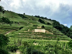 the hills of St. Joseph, vineyards, Rhone Valley, wine, France