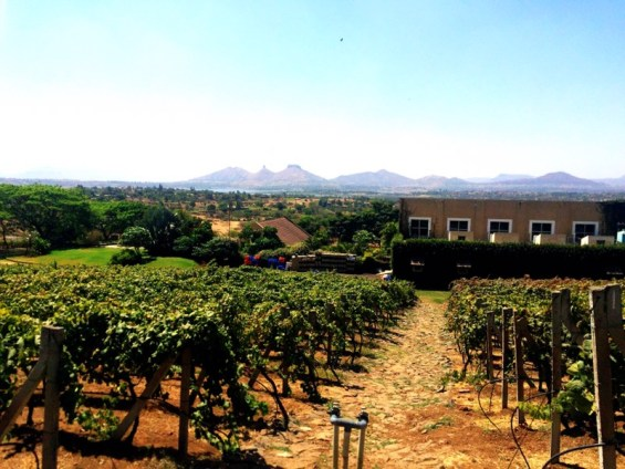 view of Grover Zampa vineyards, Nashik Valley, Maharashtra, India, Indian wine