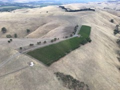 The Steingartan Vineyard, from the air