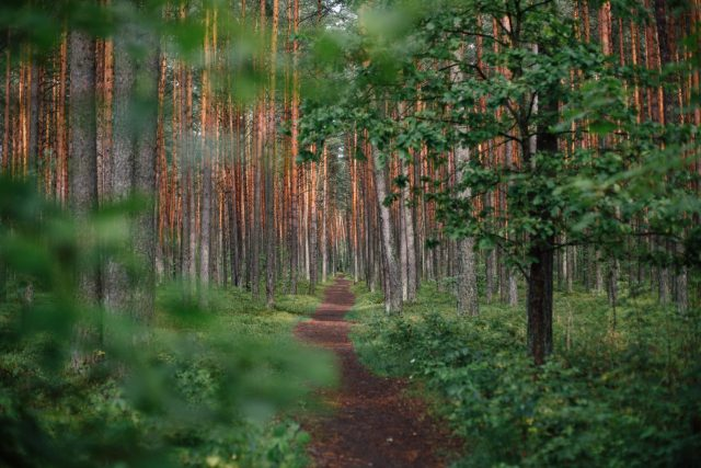green forest during daytime mental health recovery