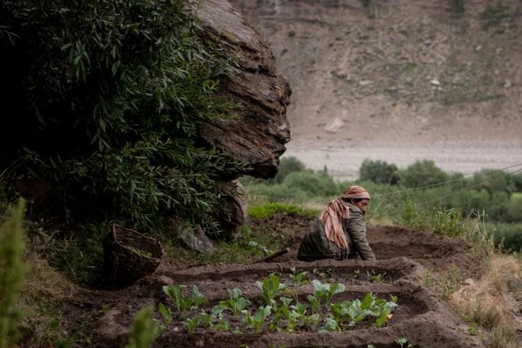 Woman working in the farm at Zanskar in Jammu and Kashmir. Credit: sandeepachetan/Flickr CC 2.0