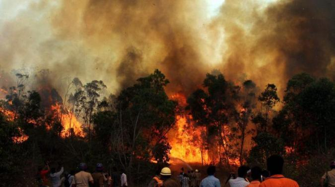 Pauri, Tehri and Nainital are the worst hit by these fires in Uttarakhand. Credit: PTI