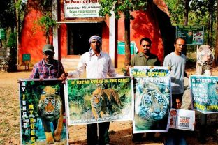 Local activists hold up posters demanding the return of Ustad to Ranthambore. Source: Rukmini Sekhar