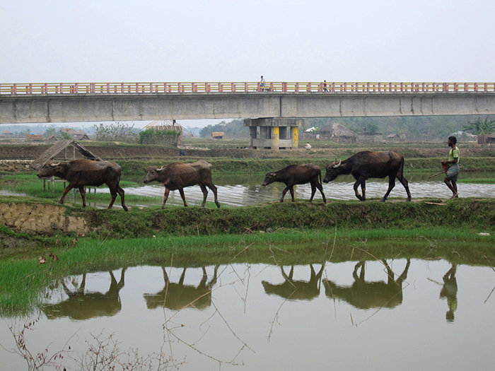 The region under threat is built on the world's largest river delta, and water is everywhere. Widespread poverty, soft sediments and rapidly multiplying infrastructure including bridges like this one near the southern city of Khulna make the region exquisitely vulnerable to earthquakes. Credit: Kevin Krajick/Lamont-Doherty Earth Observatory