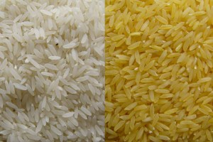 The tones of plain rice (left) and Golden Rice. Credit: Golden Rice Humanitarian Board. www.goldenrice.org