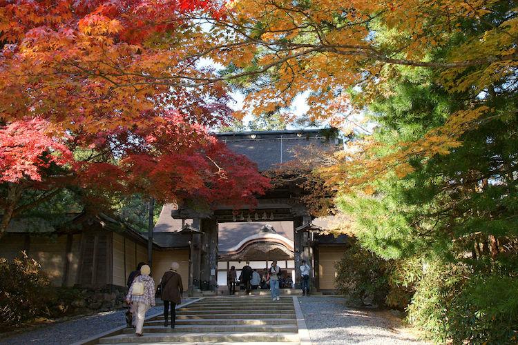 Autumn maple leaves (momiji) at Kongōbu-ji on Mount Kōya, a UNESCO World Heritage Site. Credit: Wikimedia Commons