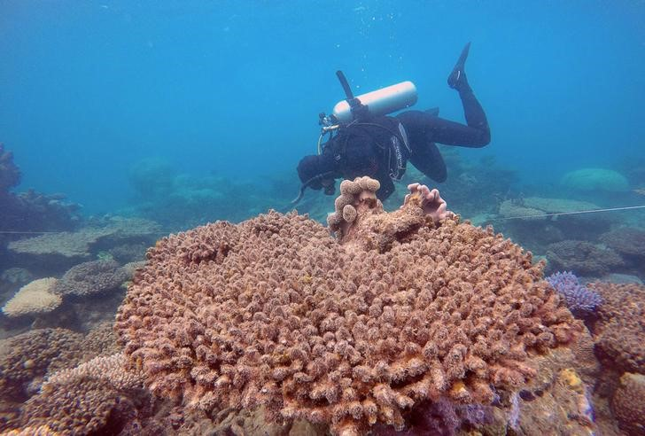 Supplied image of a scientist assessing coral mortality on Zenith Reef on the Great Barrier Reef in Australia, made available to Reuters on November 29, 2016. Andreas Dietzel/Courtesy of ARC Centre of Excellence for Coral Reef Studies/Handout via REUTERS