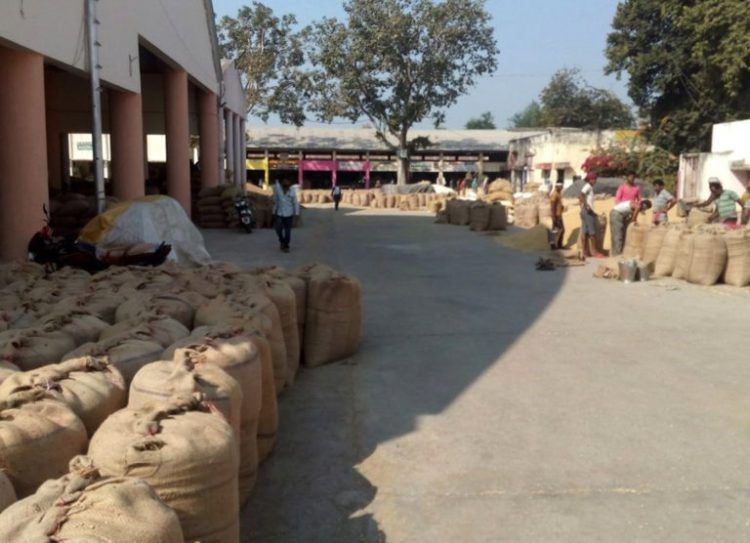 Newly-arrived sacks of soybean at the APMC in Selu town, Wardha district. Credit: PARI
