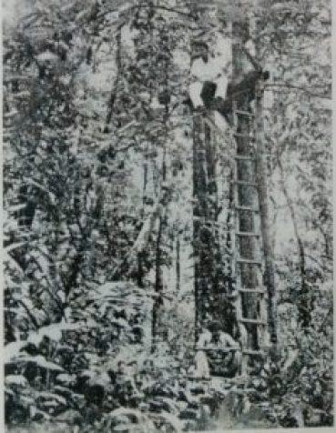VRC field investigators on platforms erected around trees. Credit: P.K. Rajagopalan