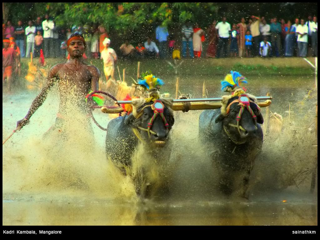 Kadri kambala. Credit: Flickr/Sainath KM CC 2.0