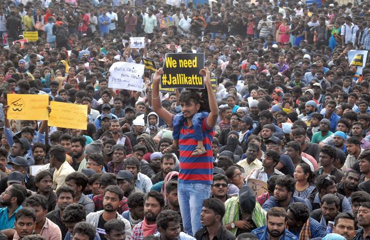 People attend a protest demanding to reverse a ban on the traditional bull-taming contests at the Marina beach in Chennai. Credit: Reuters/Files