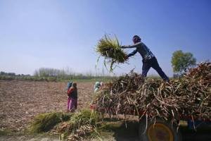 Uttar Pradesh's crop loans have shot up over the last three years. Credit: Reuters
