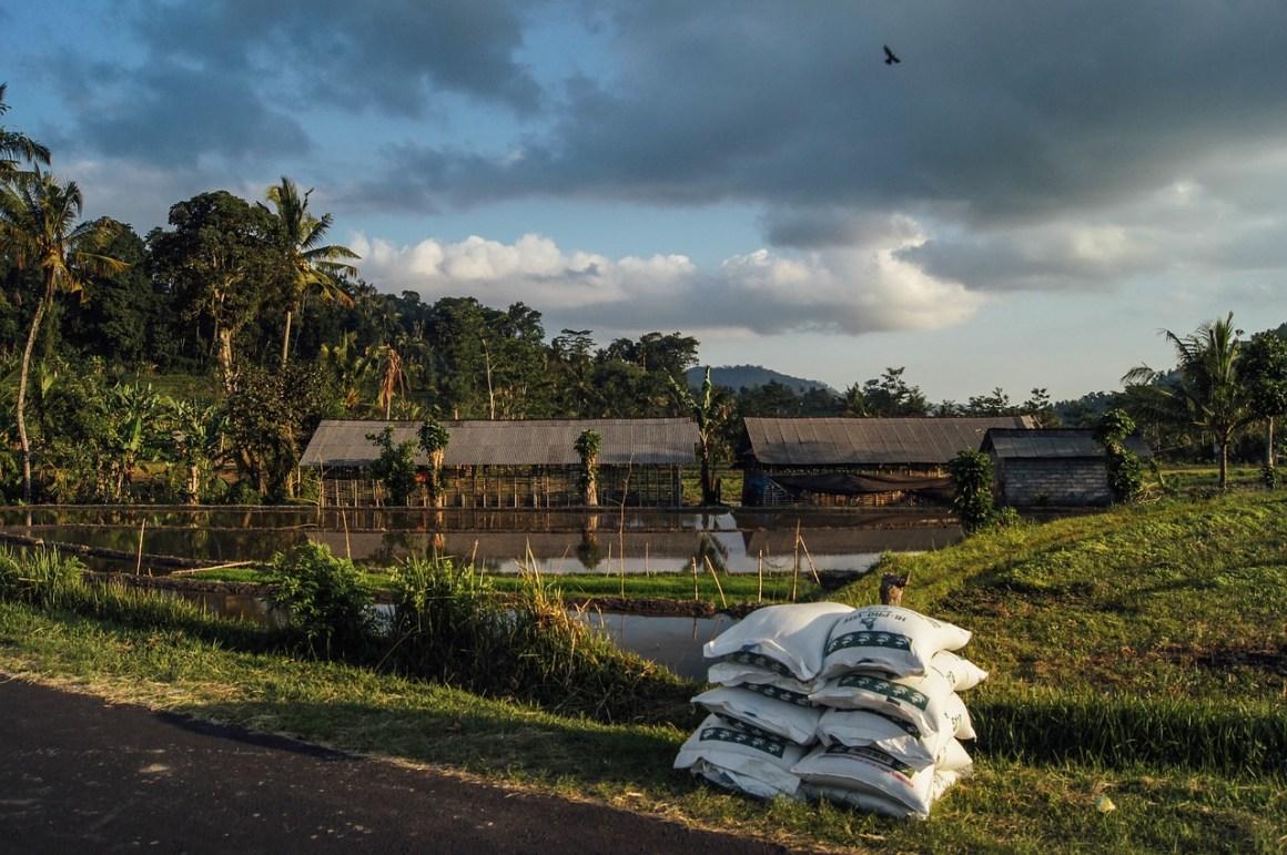 Bags of fertilisers stacked next to farmland. Credit: Unsplash/pixabay