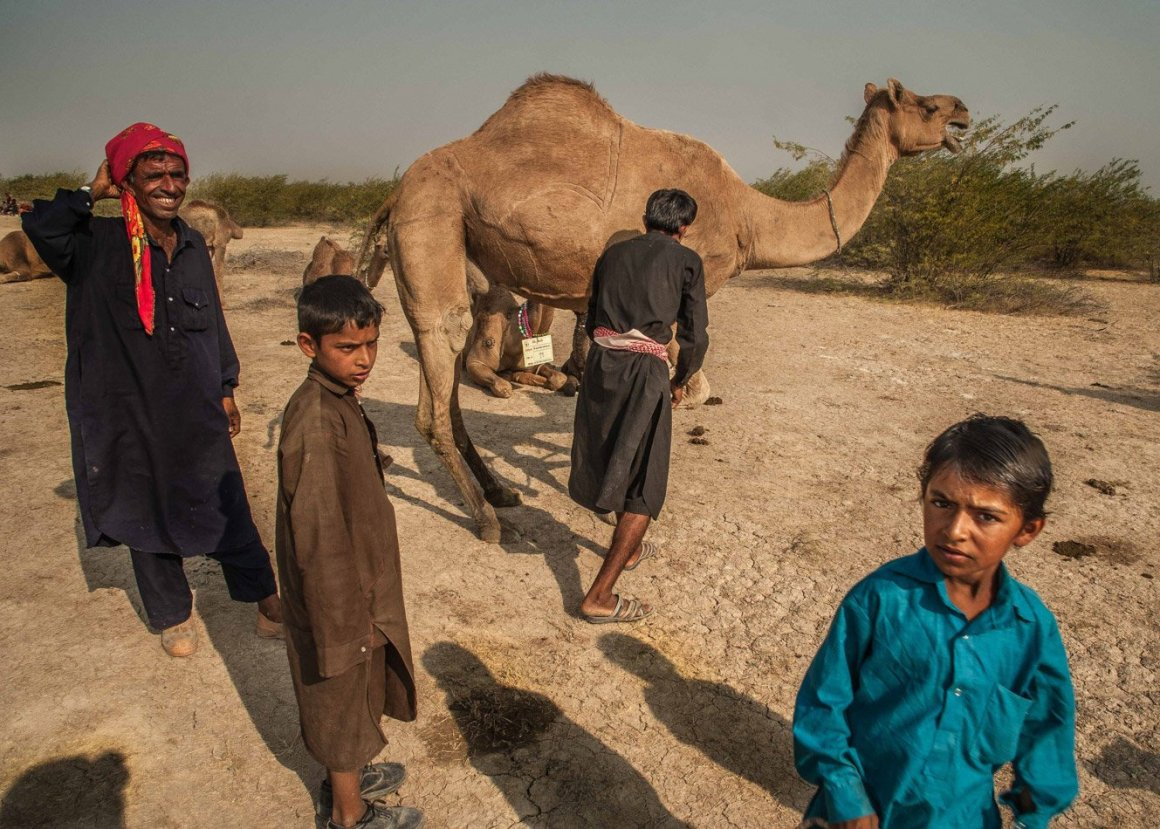 Fakriani Jat children also move with their parents and learn the skills of grazing camels from an early age. Credit: Ritayan Mukherjee/PARI