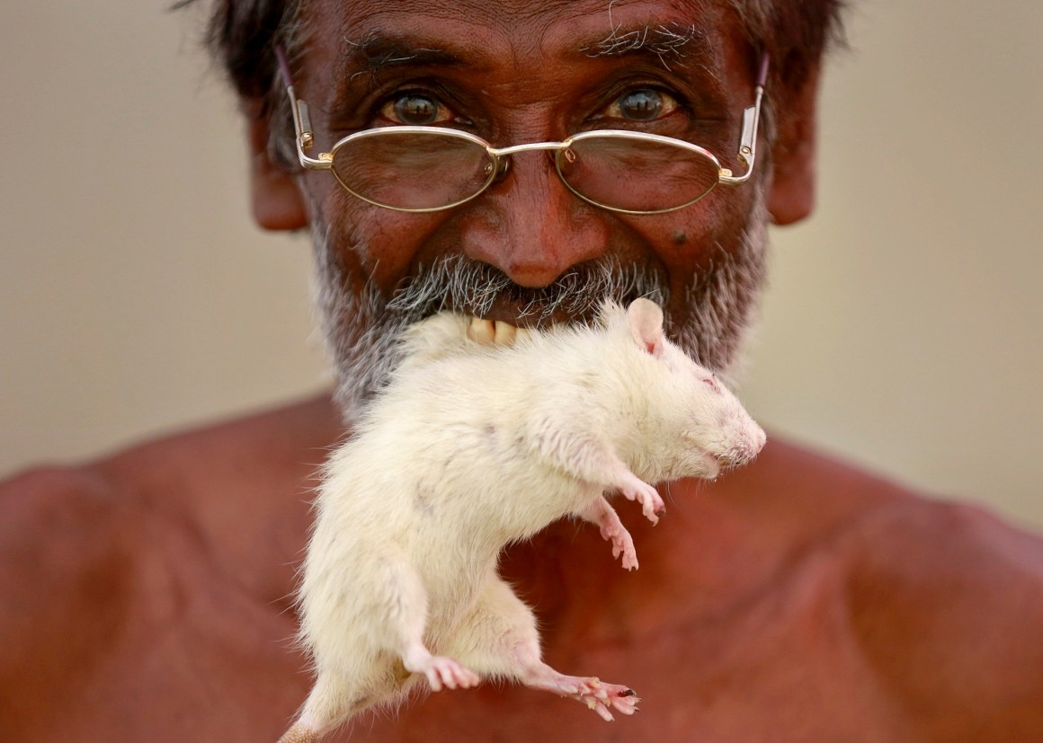 FILE PHOTO: A farmer from the southern state of Tamil Nadu poses as he bites a rat during a protest demanding a drought-relief package from the federal government, in New Delhi, India, March 27, 2017. Credit: Reuters/Cathal McNaughton/File Photo