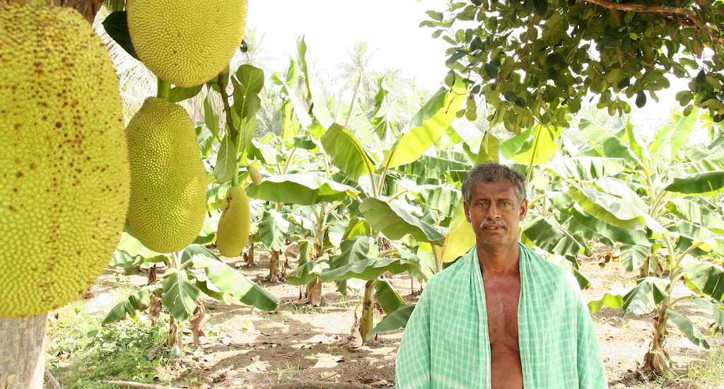 Farmer Jesuraj of Pudukottai in his farm where he practises agroforestry. Credit: R. Samuel