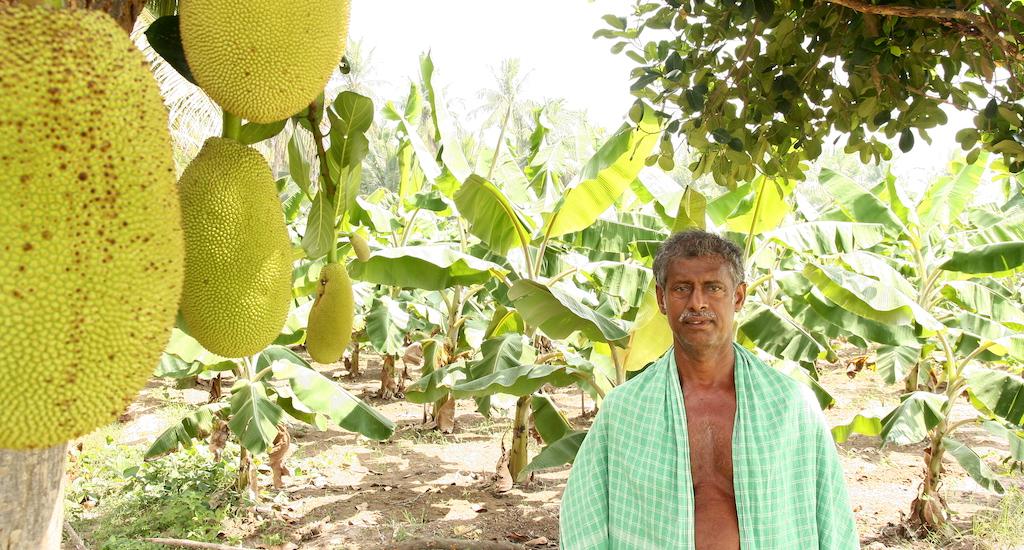 Farmer Jesuraj of Pudukottai in his farm where he practises agroforestry. Credit: R. Samuel